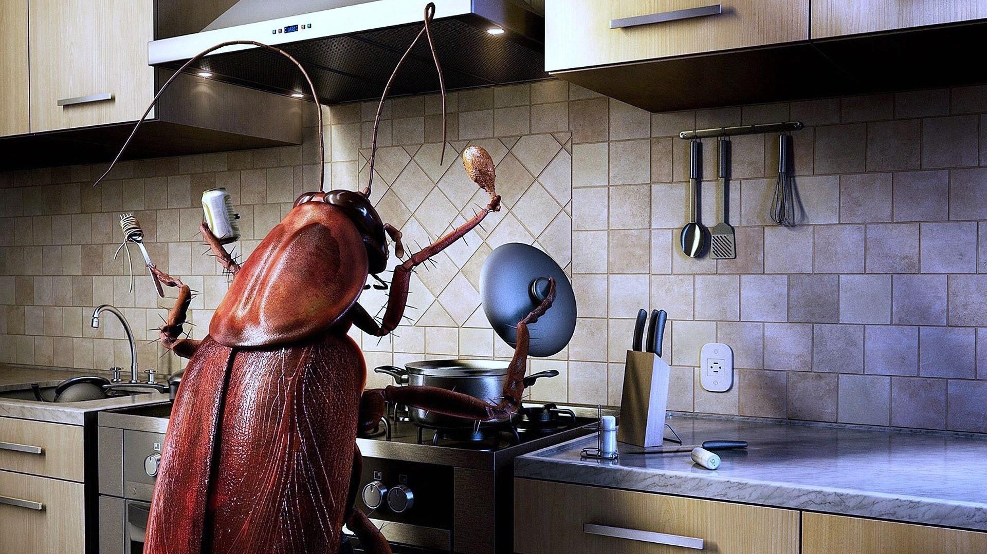 Маргиналы, клопы и тараканы в посуточной аренде